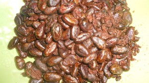 The peeled roasted cocoa beans look shiny like chocolate