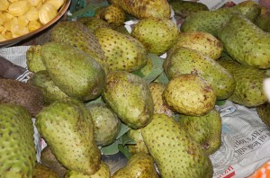 When soursop fruits are ripe, they have to be processed quickly, otherwise they rot