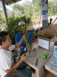 Then we attach bamboo sticks to the pots