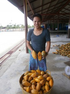 Thais hardly know cocoa and their fresh seeds